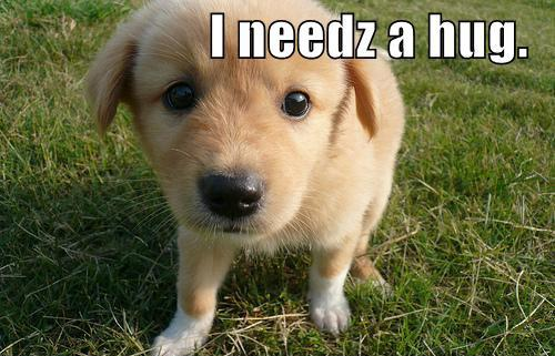 Most liked Puppies on Facebook | needz a hug
