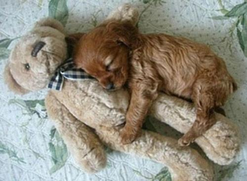 Most Liked Puppies on Facebook | Sleeping Puppy