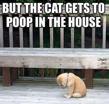 Most Liked Puppies on Facebook | The Cat Gets to Poop in the House
