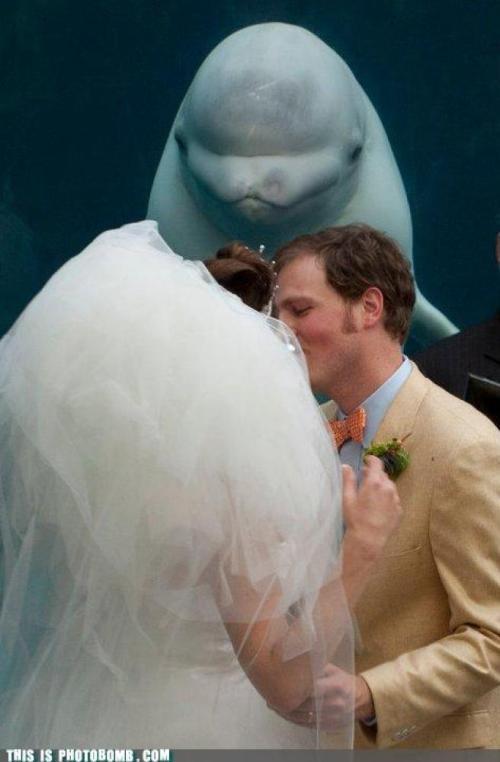 wedding photobomb 1